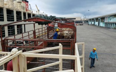 Cattle Arrival from Australia 2018